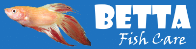Betta Fish Care - A Betta Fish Must Read!