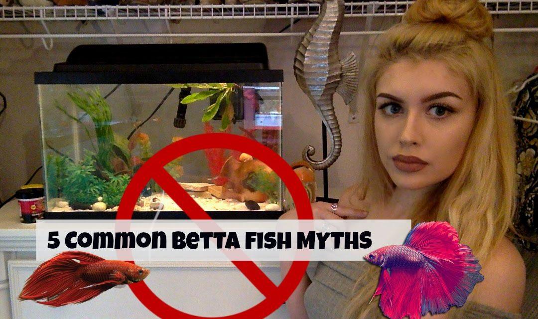 5 Common Betta Fish Myths